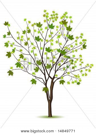 Tree With Green Leafage