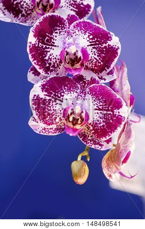 branch of orchid flower