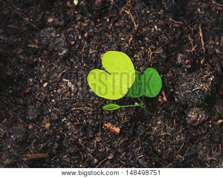 Top view, green plant growth on soil