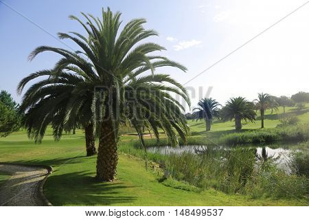 tropical green grass field with palm trees on a golf field.
