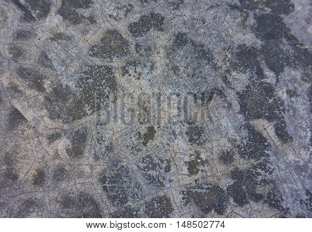 Concrete Polishing texture. Close up picture of polished concrete floor after rain.