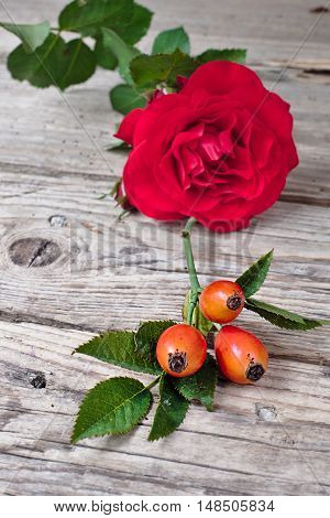 Ripe rosehips with red rose on an old wooden table
