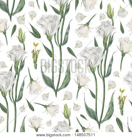 Handmade watercolor seamless pattern with white eustoma, isolated on white background. White lisianthus or eustoma in watercolor - flowers, stems, leaves and petals, textile, print design