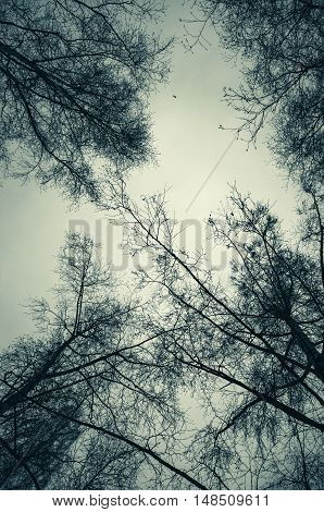 Leafless Bare Trees Over Cloudy Sky