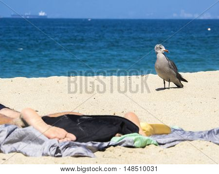 Beautiful beach with towel and gull in the back, California, USA