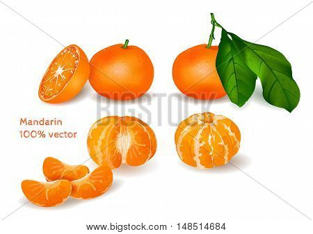 Vector collection of fresh tangerines with leaves and peeled tangerines