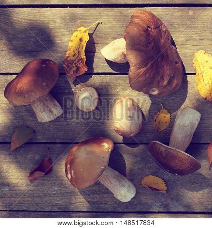 flat layout of fresh edible mushrooms collected in the forest top view / natural nature appetizing crop for delicious dishes