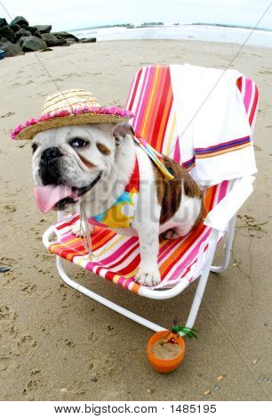 Bulldog in a beach chair