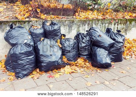 Pile of black plastic garbage bags full of yellow leaves at autumn