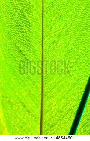 Full frame green tropical leaf background vertical, 3:2 format.
