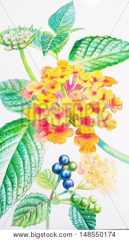 Watercolor painting original realistic orange color of verbenaceae flower and green leaves in white background. Original painting