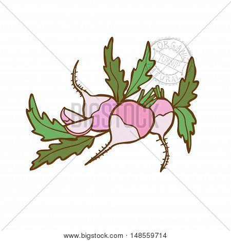 Hand Drawn Vegetable