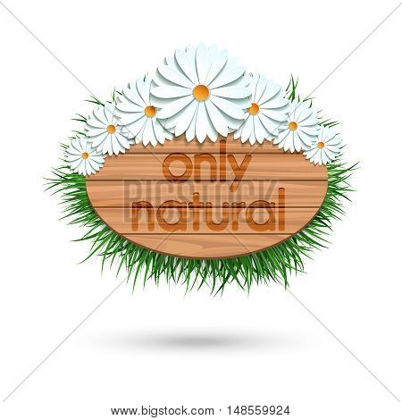 Wood panel banner with camomile bouquet and grass isolated on white. Vector illustration