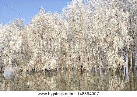 Frosty winter trees on Danube river