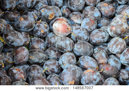 fresh black Plums in market. Texture, background
