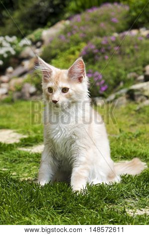Photo of a little red kitty sitting in the garden