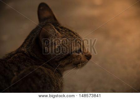 Cat Life Warm Evening Lookout  Animal Nature