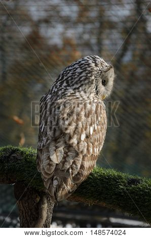 Owl sitting on tree branch covered with green moss