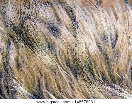Closeup of a brown artificial fur texture for background