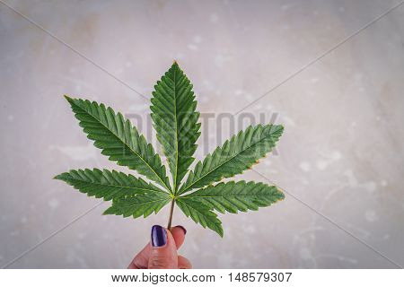 Hand holding single marijuana leaf against light patterned background