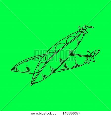 Pods of green peas isolated vector illustration. Vector line illustration on green background.