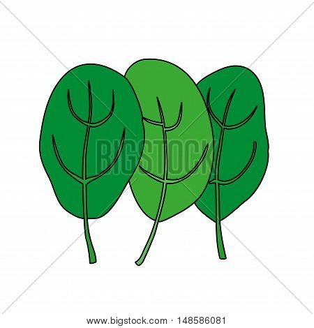 Cartoon illustration of spinach. Isolated on white background. Spinach leaves. Fresh green raw plant for vegetarian nutrition, bio food concept, markets, organic meal. Vector.