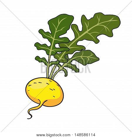 Yellow turnip with leaves, Cartoon vector illustration of turnip.