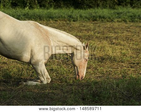 White horse standing on a background of green trees