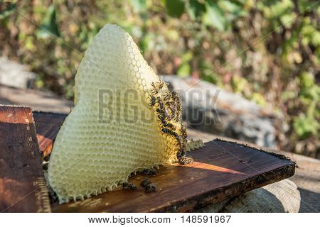 Bees build honeycombs on a wooden frame close-up, Ukraine