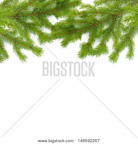Background of fir Christmas green branches. Isolated on white.