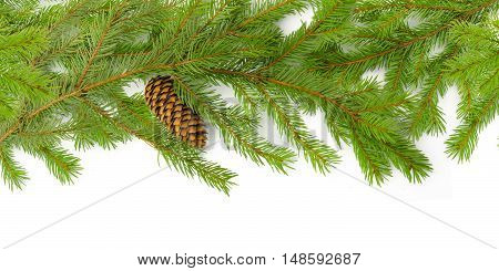 Background of fir Christmas green branches with buds. Isolated on white.
