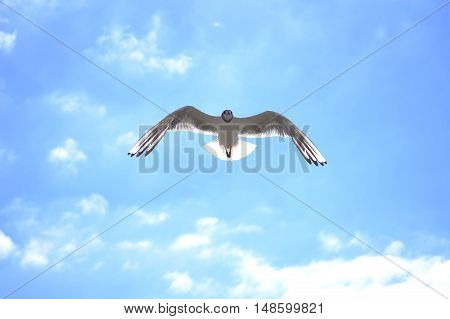 Blue,  sunny sky, backlight, wild bird, fly, sea gull