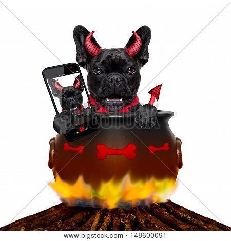 Halloween Dog And Bonfire