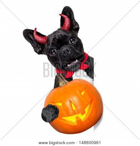 Halloween Dog  Banner