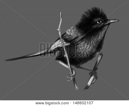 Red backed fairy wren sitting on a branch.