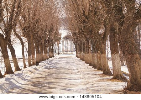 Beautiful winter alley with trees without leaves in Kostroma Russia