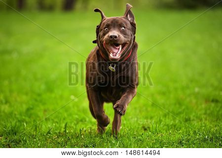 Dog running through a meadow in garden