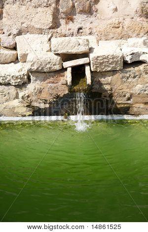 Grünen Teich