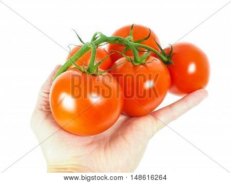Person Holding A Bunch Of Tomatoes