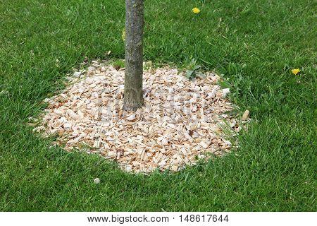 Mulch around a tree ihn a garden