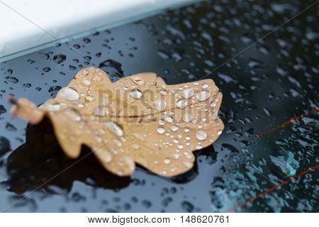 Raindrops on the autumn leaf on car glass