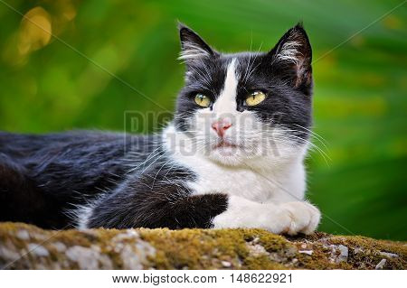 black and white young cat on green background