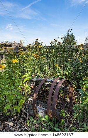 Overgrown plants in a Community garden Calgary Alberta Canada