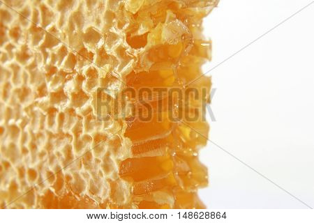the a honeycomb closeup on white background