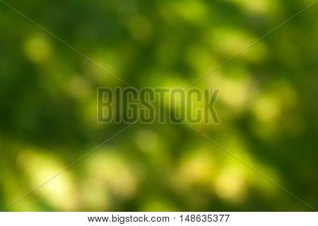 Blurry Green Background