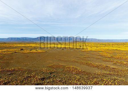 Almost Flat Yellow Landscape Of Tankwa Karoo National Park