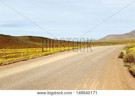 Brown And Yellow Road Leading To Tankwa Karoo