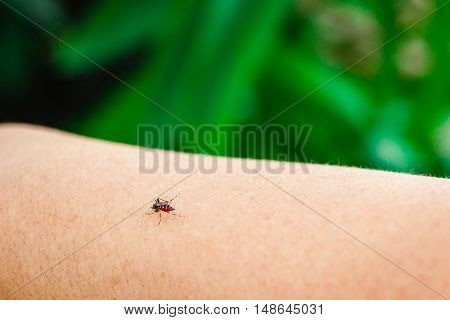 photo of mosquito sucking blood on arm.