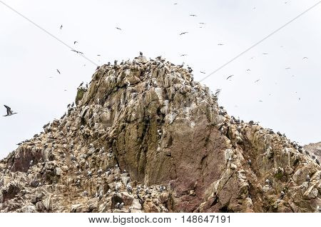 Wild birds on rocky formation ballestas island, paracas, Peru