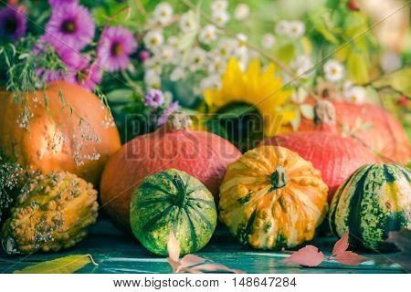 Autumn Harvest Garden Pumpkin Fruits Colorful Flowers Plants